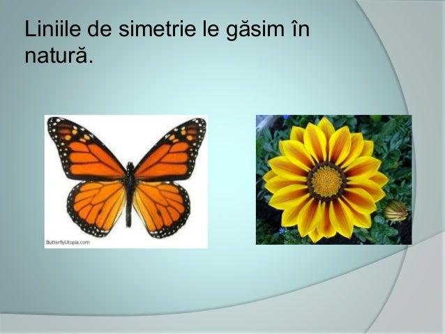 Liniile de simetrie le găsim în natură.