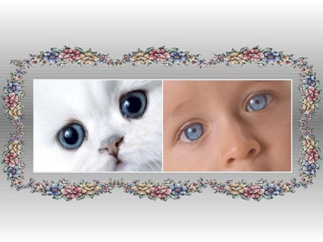 Choisis maintenant un    animal qui te  ressemble le plus
