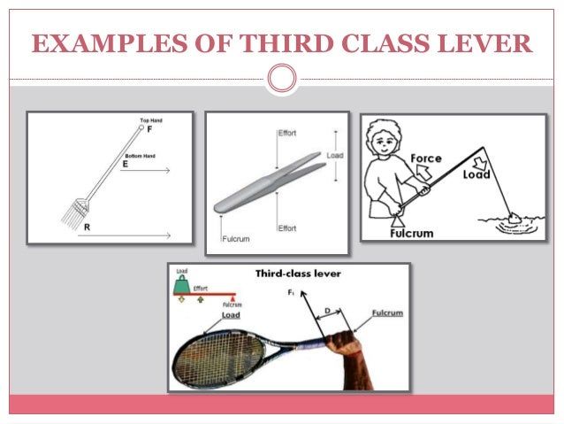 Examples of a first-class lever | download scientific diagram.