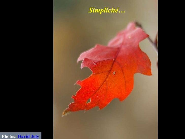 Photos:  David Joly Simplicité…