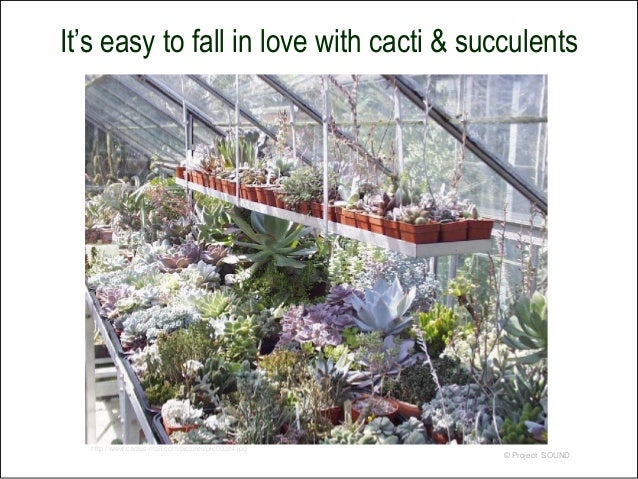 how to display succulents 30 cute examples.htm simply succulent 2009  simply succulent 2009