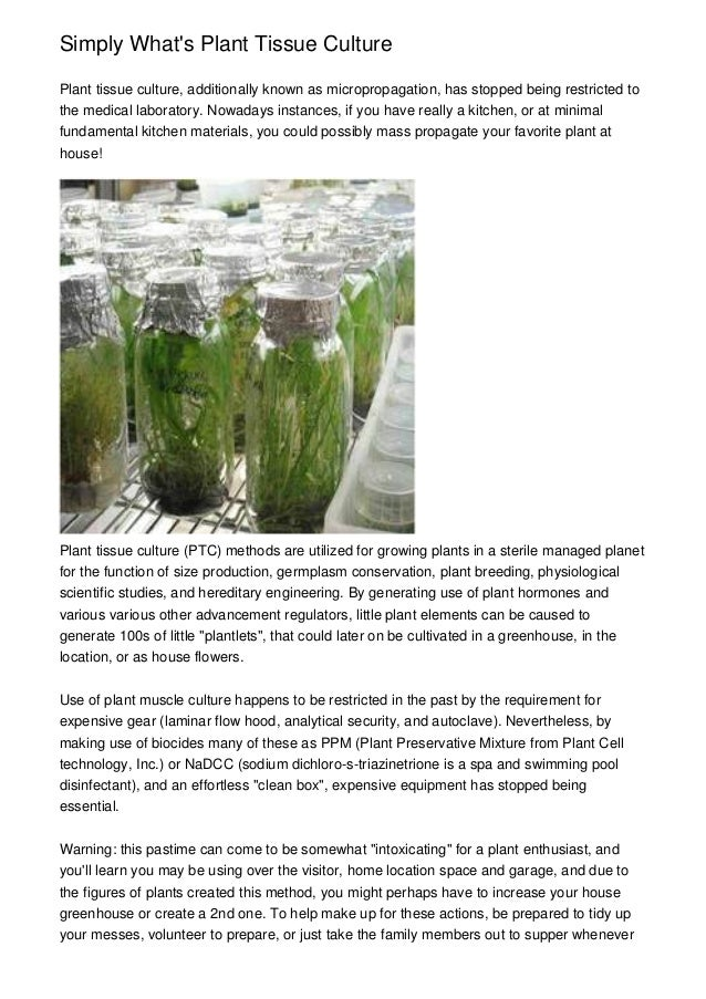 Simply What\'s Plant Tissue Culture