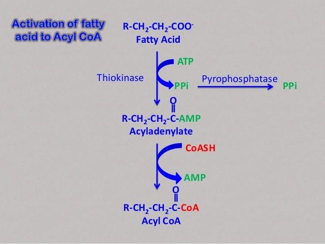 activation of fatty acids