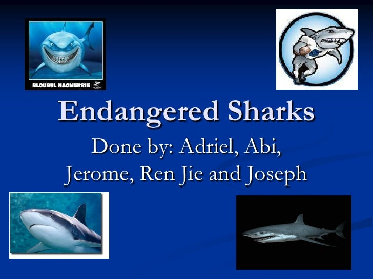 Endangered Sharks   Done by: Adriel, Abi,Jerome, Ren Jie and Joseph