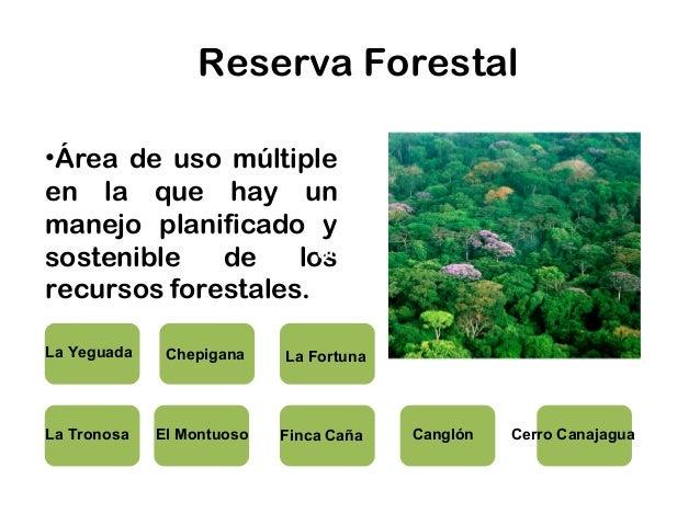 Sistema nacional de reas protegidas sinap for Importancia de los viveros forestales
