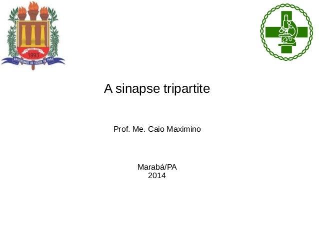 A sinapse tripartite Prof. Me. Caio Maximino Marabá/PA 2014