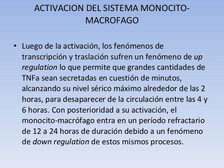 ACTIVACION DEL SISTEMA MONOCITO-MACROFAGO <ul><li>Luego de la activación, los fenómenos de transcripción y traslación sufr...