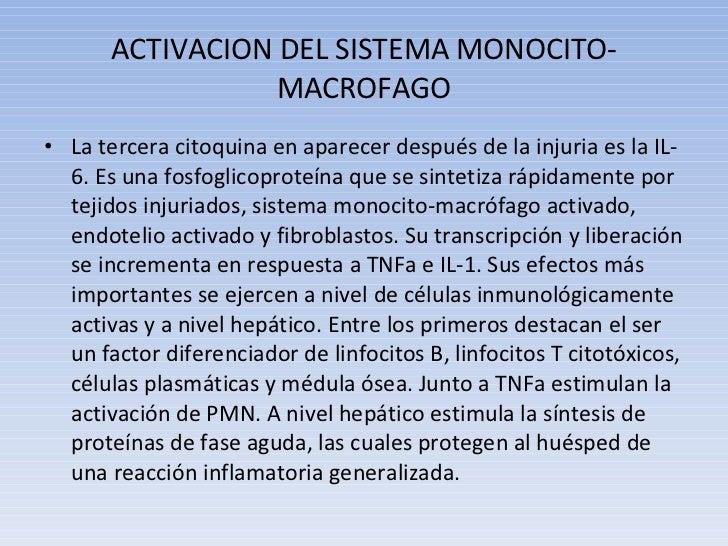 ACTIVACION DEL SISTEMA MONOCITO-MACROFAGO <ul><li>La tercera citoquina en aparecer después de la injuria es la IL-6. Es un...