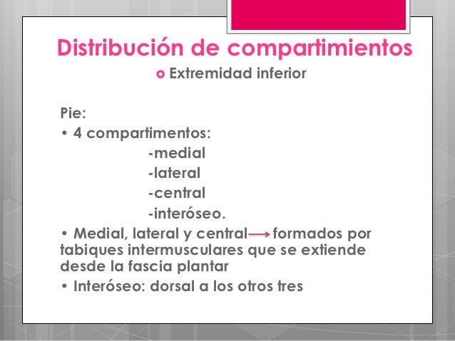 Distribución de compartimientos              Extremidad   inferiorPie:• 4 compartimentos:            -medial            -...