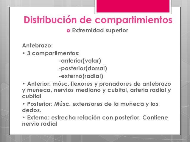 Distribución de compartimientos                  Extremidad superiorAntebrazo:• 3 compartimentos:              -anterior(...