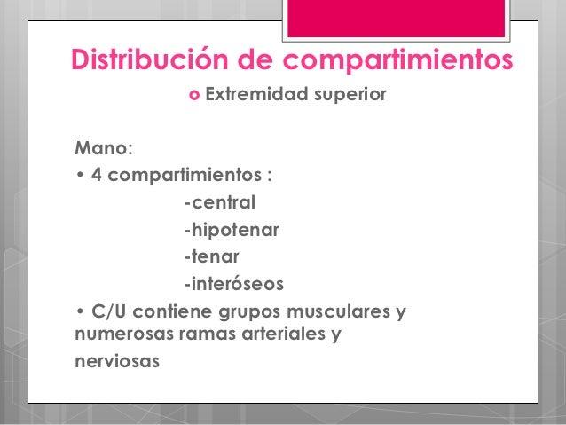 Distribución de compartimientos            Extremidad   superiorMano:• 4 compartimientos :            -central           ...