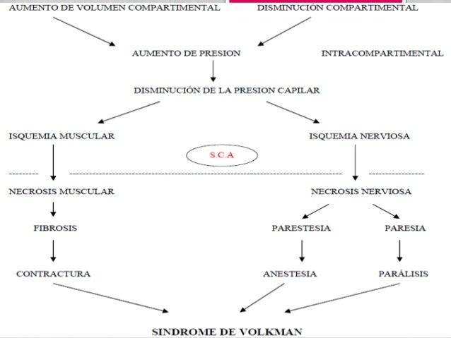 Anatomía patológica Macroscópicamente   observamos:- Palidez- Edema- Inflamación Microscópicamente observamos:- Degenera...