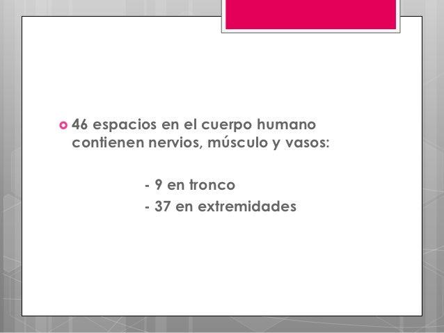  46   espacios en el cuerpo humano contienen nervios, músculo y vasos:          - 9 en tronco          - 37 en extremidades