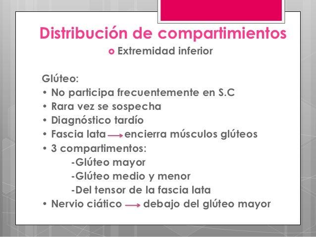 Distribución de compartimientos             Extremidad   inferiorGlúteo:• No participa frecuentemente en S.C• Rara vez se...