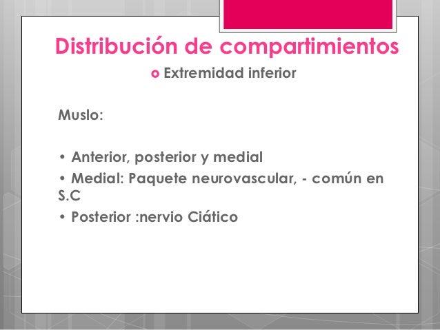 Distribución de compartimientos             Extremidad   inferiorMuslo:• Anterior, posterior y medial• Medial: Paquete ne...
