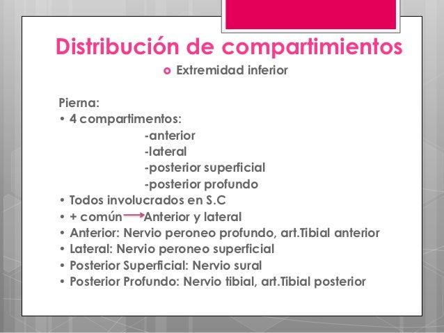 Distribución de compartimientos                     Extremidad inferiorPierna:• 4 compartimentos:                -anterio...