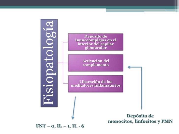 Mayoría Asintomáticos- Hematuria macroscópica o microscópica- Disminución del complemento sérico                          ...