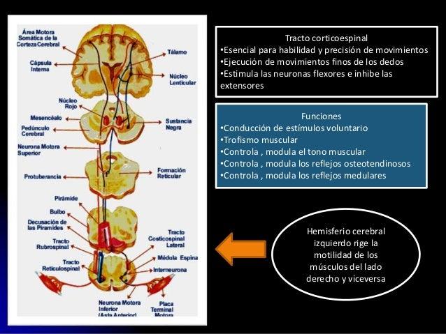 semiologia Sindrome piramidal