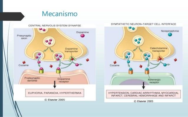 Serotoninergico pdf sindrome