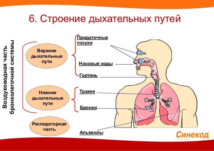 наркотические препараты от болей в спине