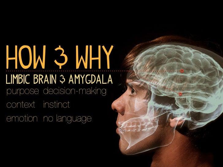 How & WhyLimbic Brain & Amygdalapurpose decision-makingcontext instinctemotion no language