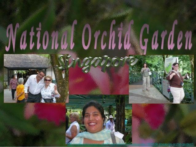 http://www.authorstream.com/Presentation/michaelasanda-1904534-singapore-orchid-garden1/