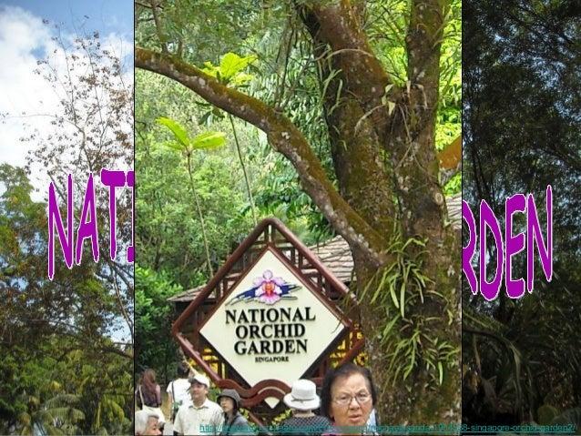 http://www.authorstream.com/Presentation/michaelasanda-1904538-singapore-orchid-garden2/