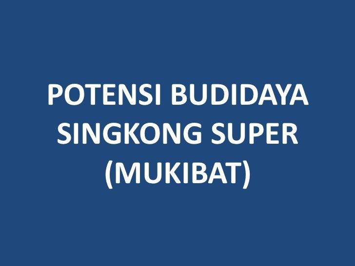 POTENSI BUDIDAYA SINGKONG SUPER    (MUKIBAT)
