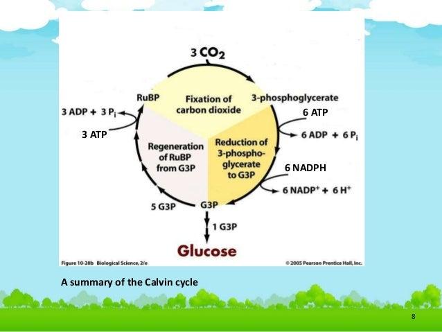 diagram explaining photosynthesis