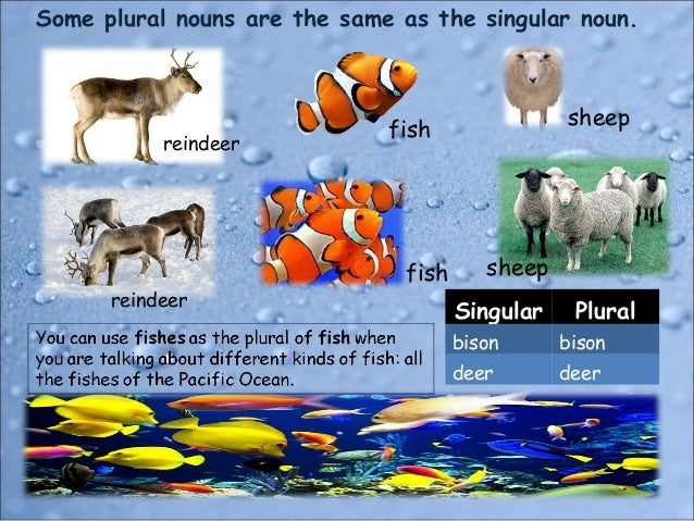 Singular and plural nouns for Plural of fish