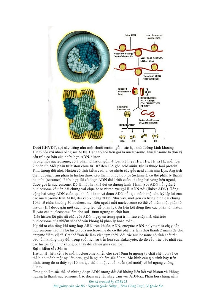 shop Genesis and Evolution of Time: A Critique of Interpretation