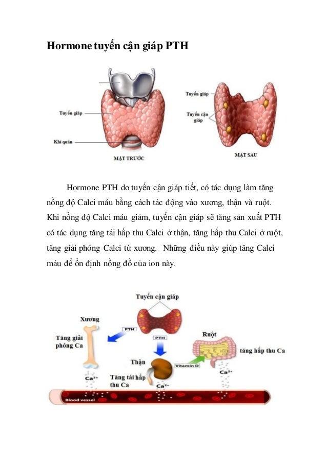Sinh lý nội tiết của thận 2