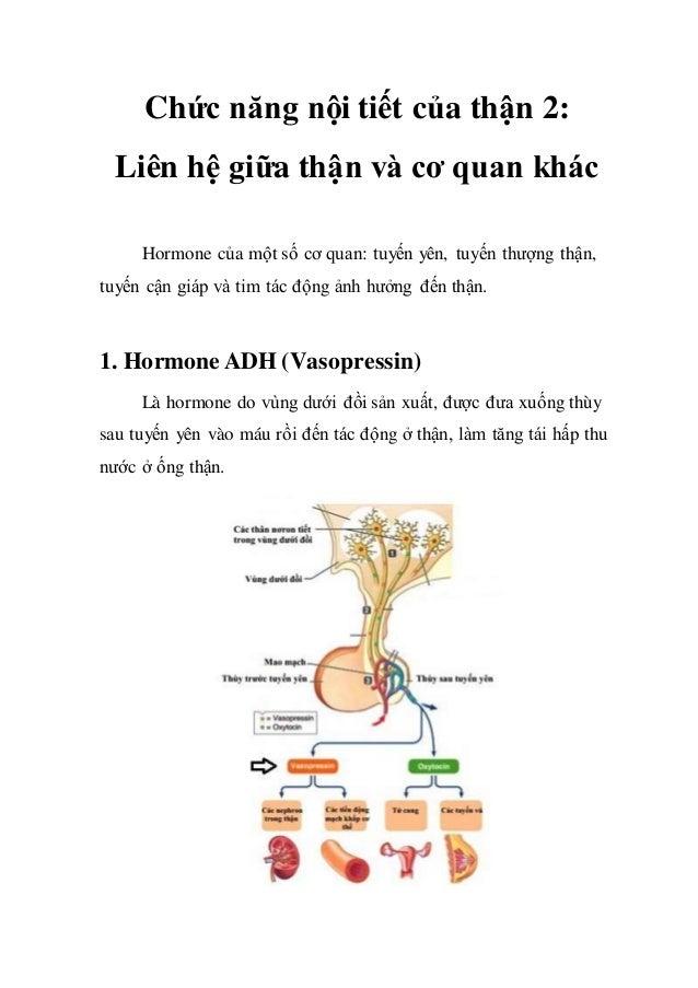 Chức năng nội tiết của thận 2: Liên hệ giữa thận và cơ quan khác Hormone của một số cơ quan: tuyến yên, tuyến thượng thận,...