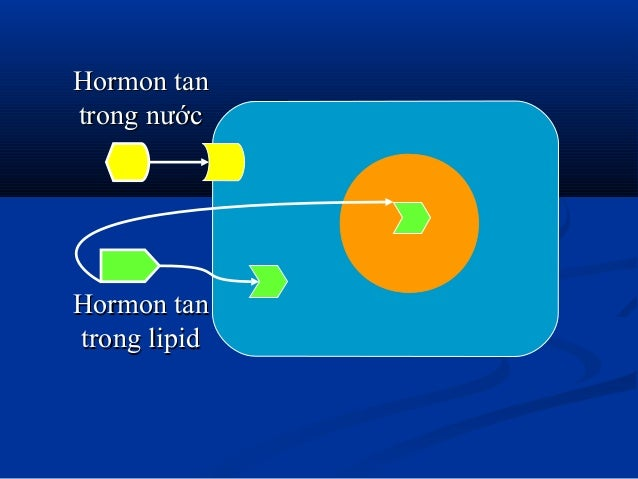 Hormon tanHormon tan trong nướctrong nước Hormon tanHormon tan trong lipidtrong lipid