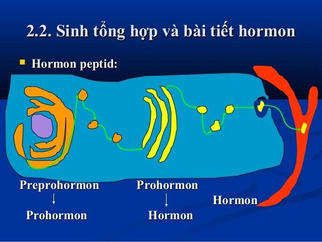 2.2. Sinh tổng hợp và bài tiết hormon2.2. Sinh tổng hợp và bài tiết hormon  Hormon peptid:Hormon peptid: Preprohormon Pro...