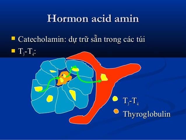 Hormon acid aminHormon acid amin  Catecholamin: dự trữ sẵn trong các túiCatecholamin: dự trữ sẵn trong các túi  TT33-T-T...