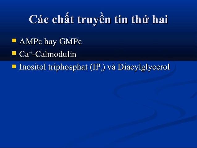 Các chất truyền tin thứ haiCác chất truyền tin thứ hai  AMPc hay GMPcAMPc hay GMPc  CaCa++++ -Calmodulin-Calmodulin  In...