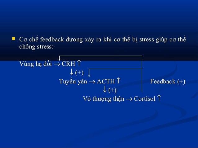  Cơ chế feedback dương xảy ra khi cơ thể bị stress giúp cơ thểCơ chế feedback dương xảy ra khi cơ thể bị stress giúp cơ t...