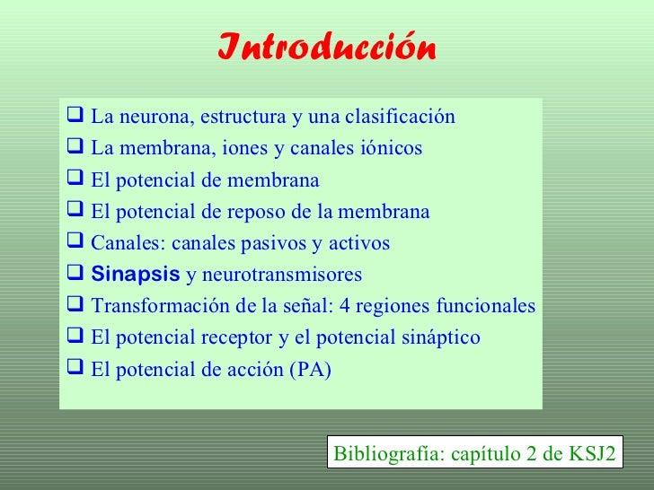 Introducción <ul><li>La neurona, estructura y una clasificación </li></ul><ul><li>La membrana, iones y canales iónicos </l...