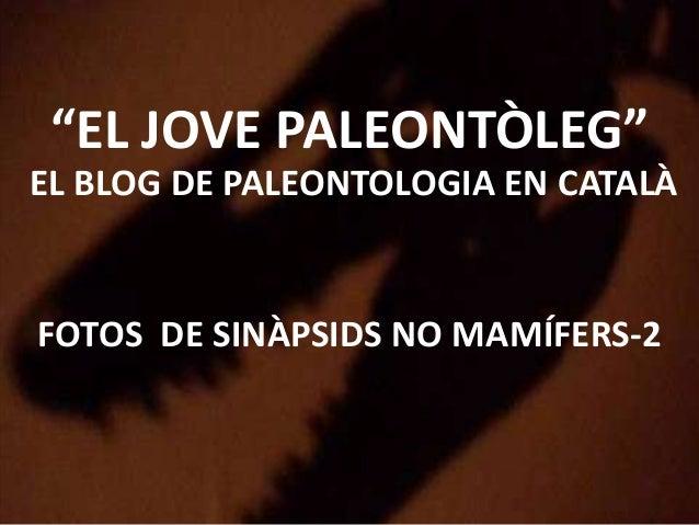 """""""EL JOVE PALEONTÒLEG"""" EL BLOG DE PALEONTOLOGIA EN CATALÀ FOTOS DE SINÀPSIDS NO MAMÍFERS-2"""
