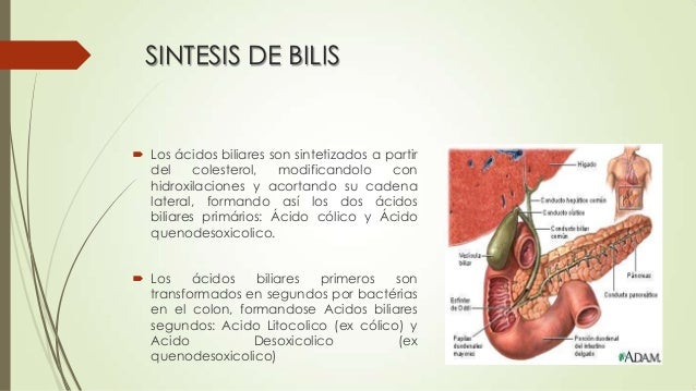 Sintesis de bilis e bilirrubina 2
