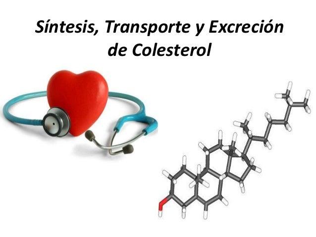 Síntesis, Transporte y Excreción          de Colesterol