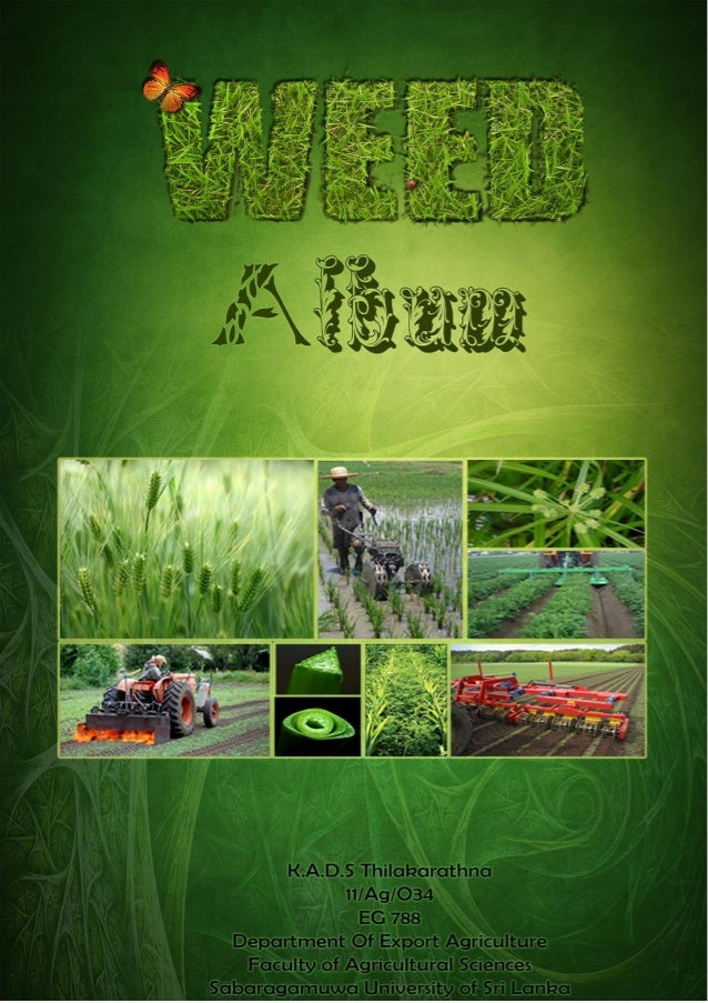 Content 1. Introduction - A WEED - Characteristics of weeds 2. The impact of weeds - on agriculture - on livestock - on hu...