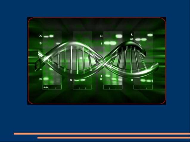 Función de el ADN ● La información genética almacenada en la secuencia de nucleótidos de ADN sirve para dos propósitos: ● ...