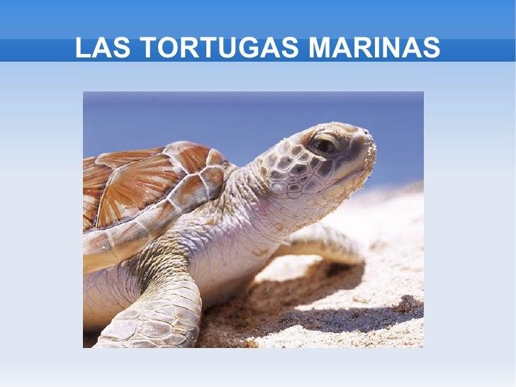 LAS TORTUGAS MARINAS