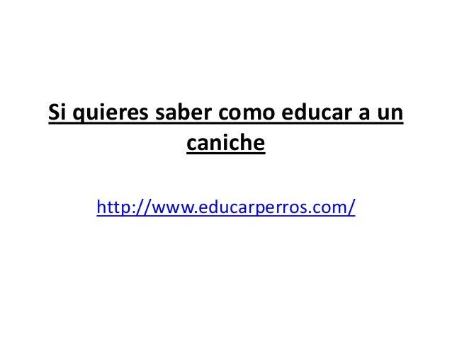 Si quieres saber como educar a un              caniche    http://www.educarperros.com/