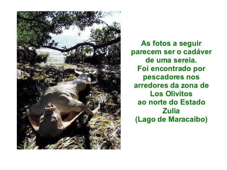 As fotos a seguir parecem ser o cadáver de uma sereia. Foi encontrado por pescadores nos arredores da zona de Los Olivitos...