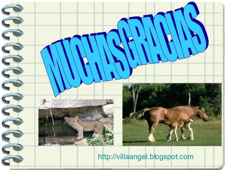 MUCHAS GRACIAS http://villaangel.blogspot.com