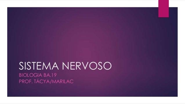 SISTEMA NERVOSO BIOLOGIA BA.19 PROF. TÁCYA/MARILAC