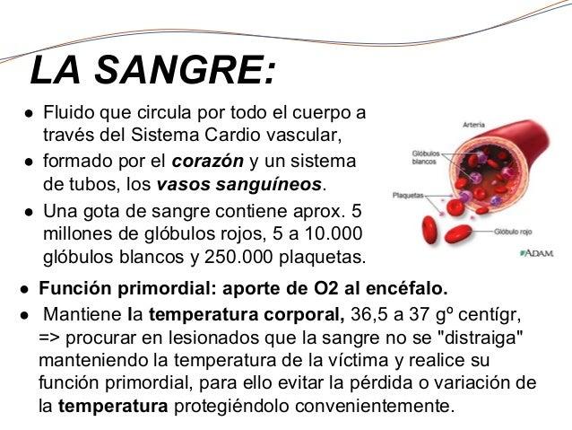 Circuito Que Realiza La Sangre : Sistema cardiovascular